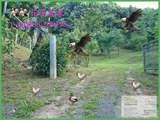 花蓮 超美 景觀綠地