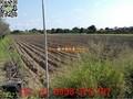 [南區]永成路近86農地(1)-南區興農段